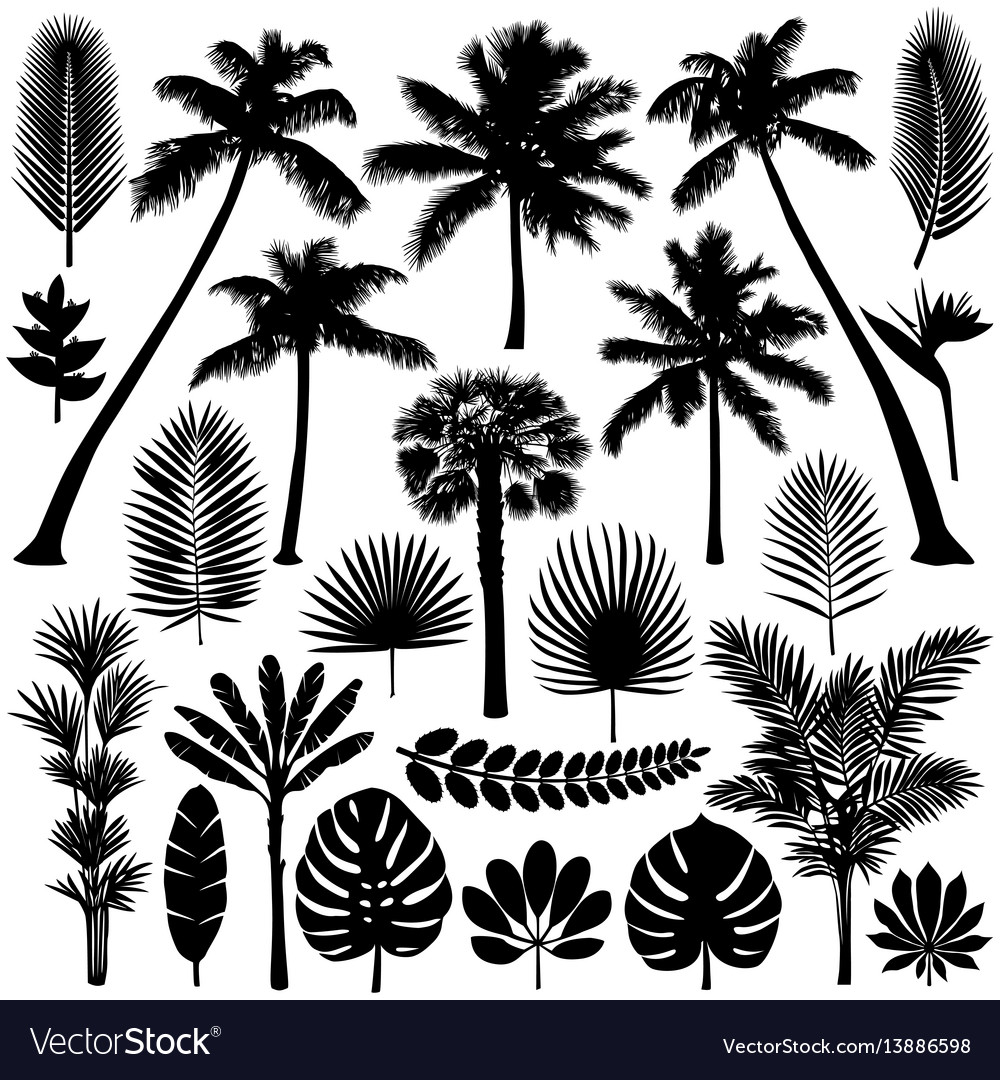 Palm and tropical plant silhouette set