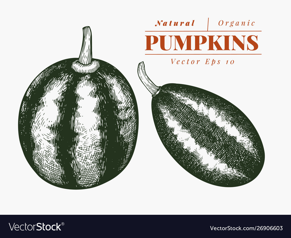 Pumpkin set hand drawn vegetable engraved style