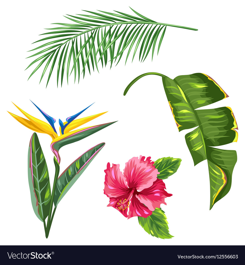 Tropical leaves and flowers set Palms branches