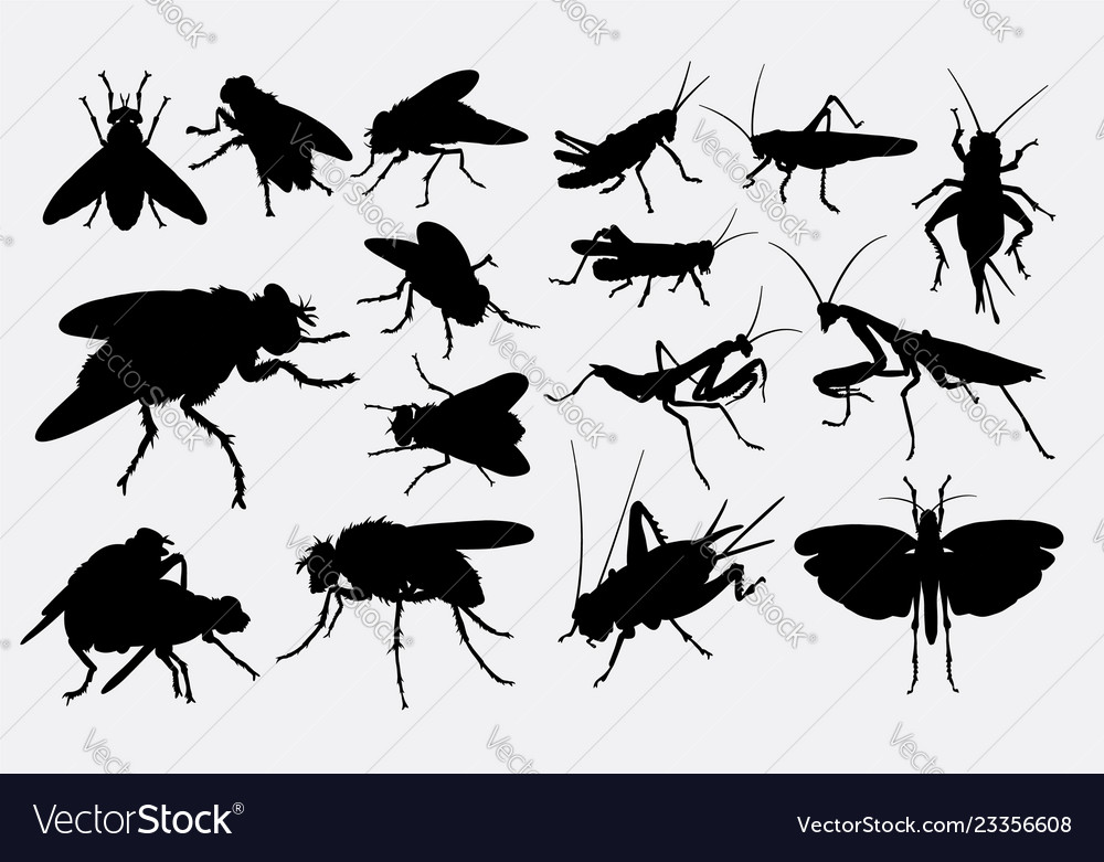 Grasshopper and fly animal silhouette