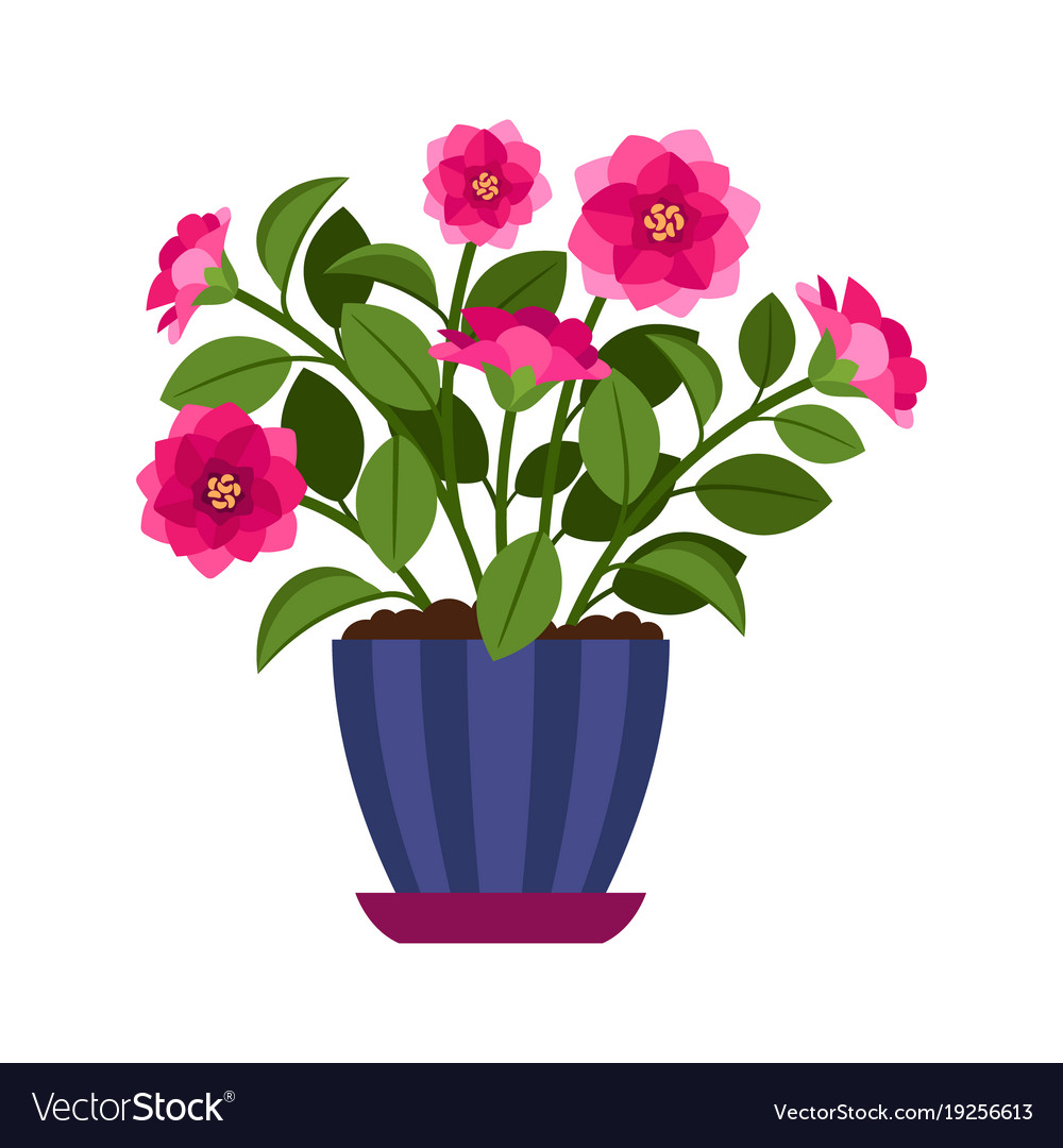 Camellia House Plant In Flower Pot Royalty Free Vector Image