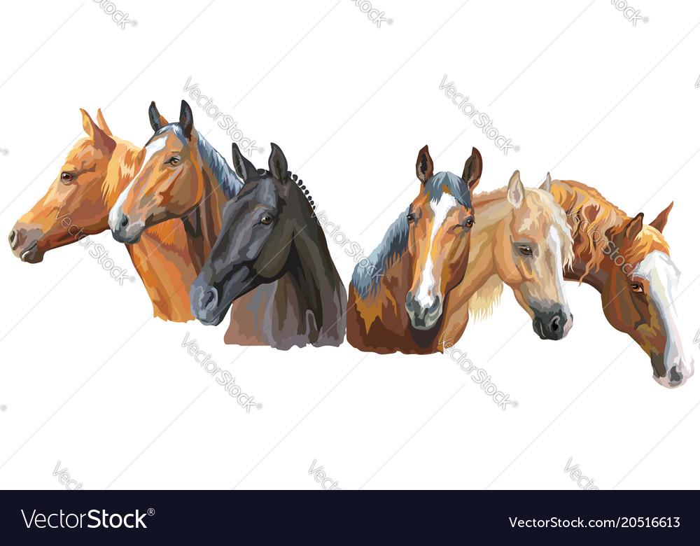 Set of horses breeds2