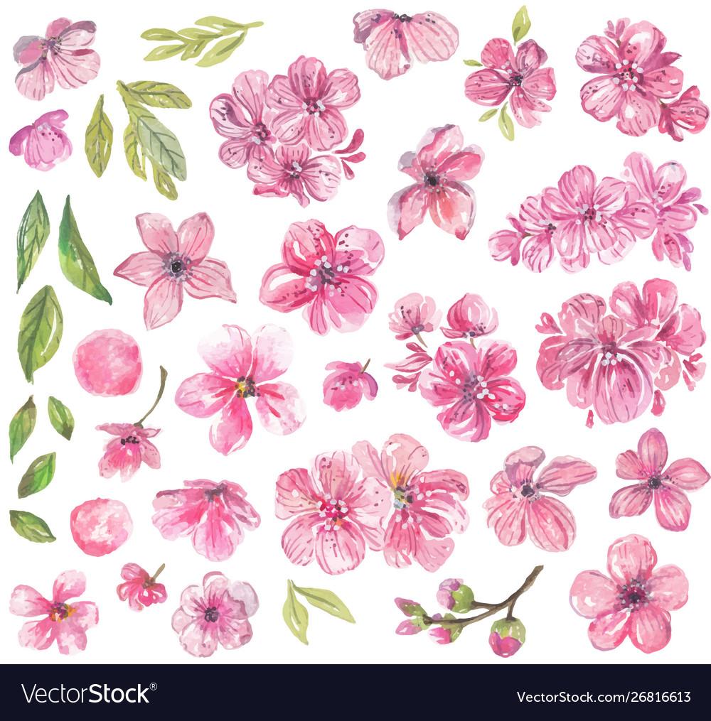 Watercolor pink flowers