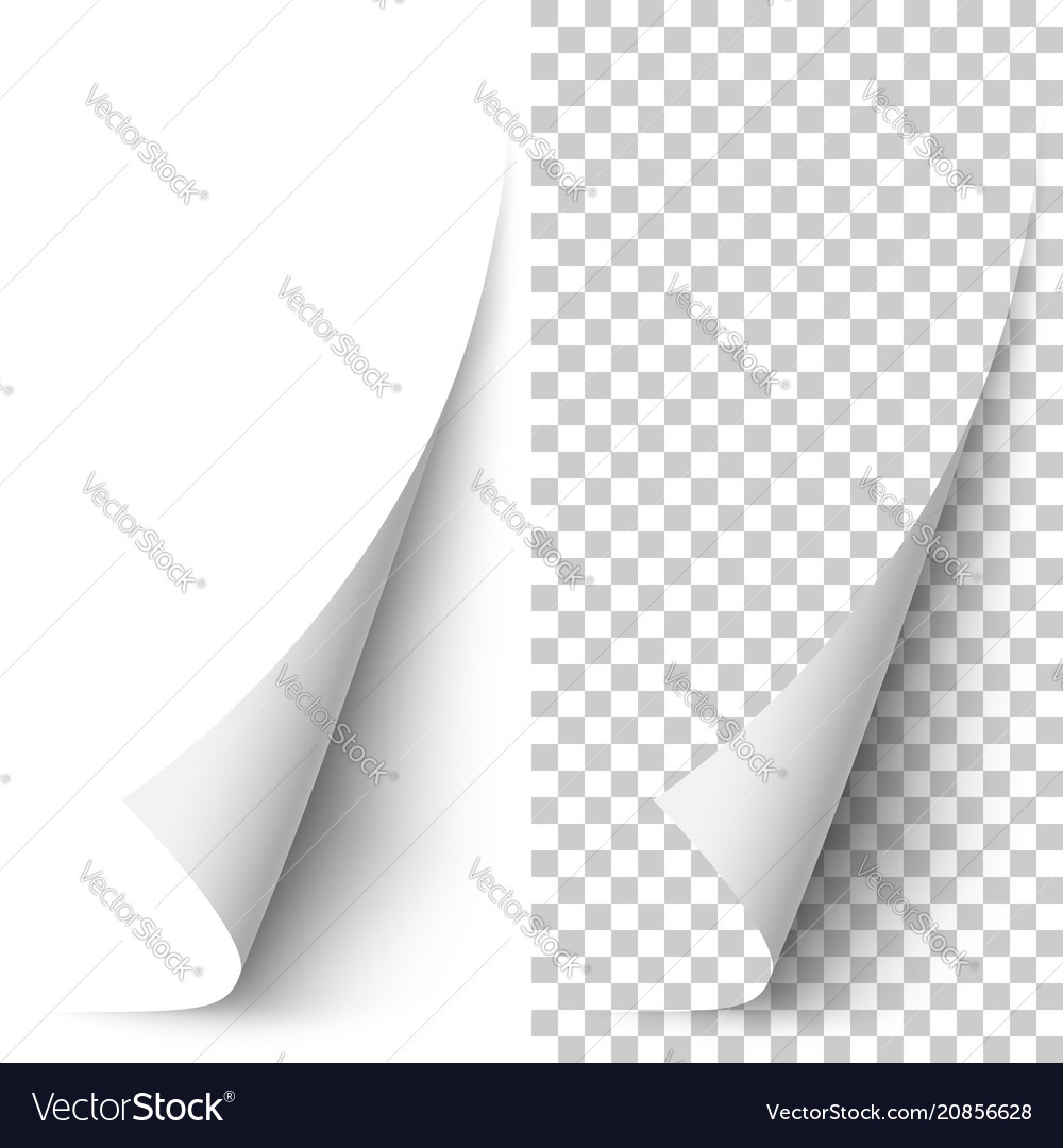 White vertical paper corner rolled up vector image