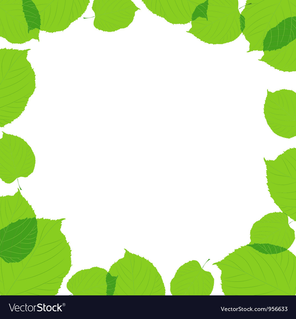 Green leaves frame on the white background vector image