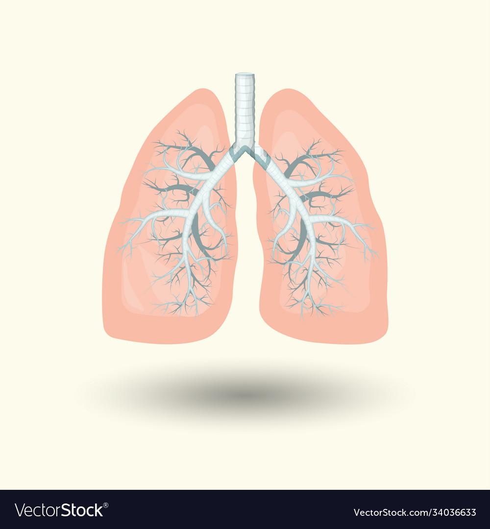 Human lungs cartoon style