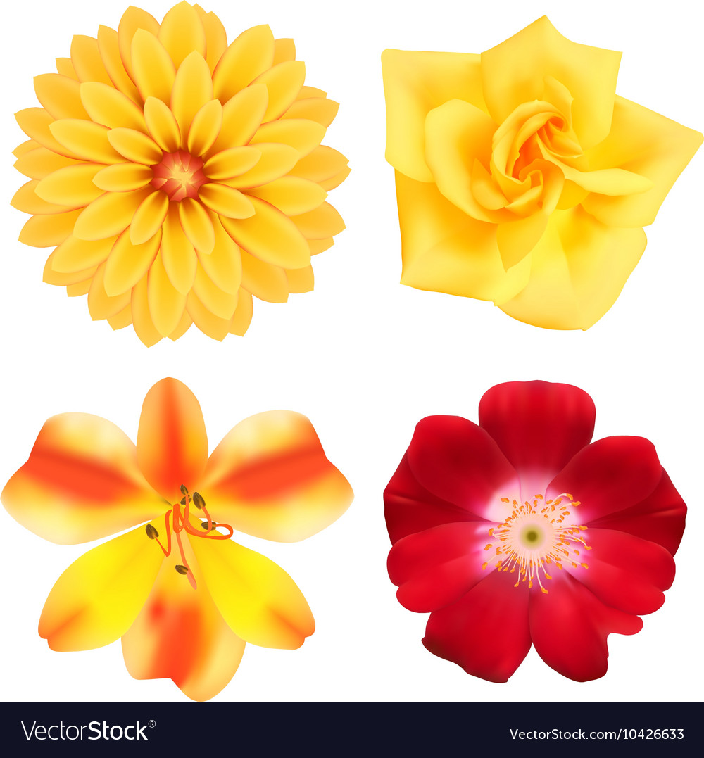 Yellow Floral Icon Set Royalty Free Vector Image
