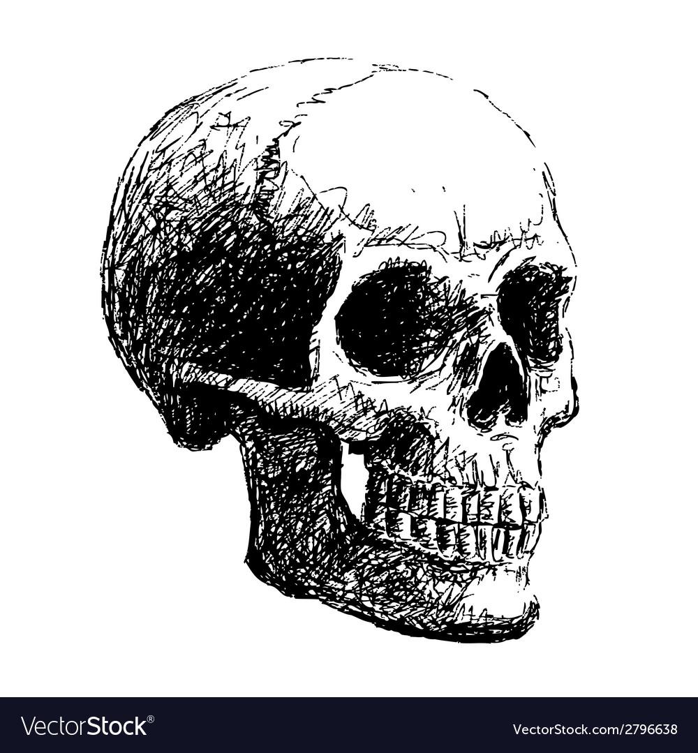 Side view of skull