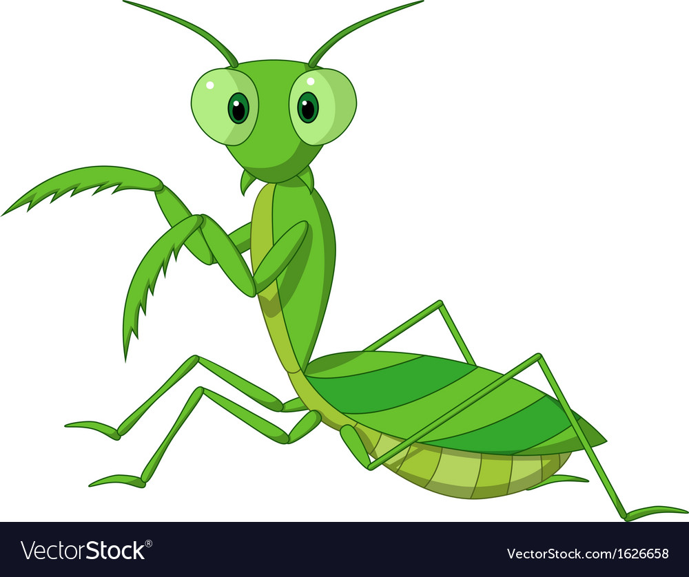 pretty praying mantis