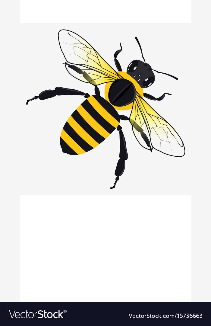 Detailed honey bee