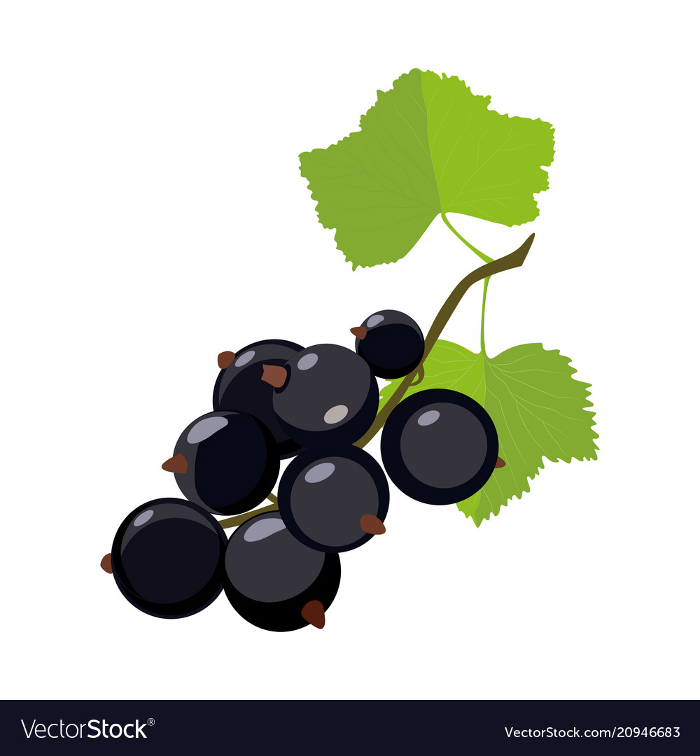 Black currant icon in cartoon style