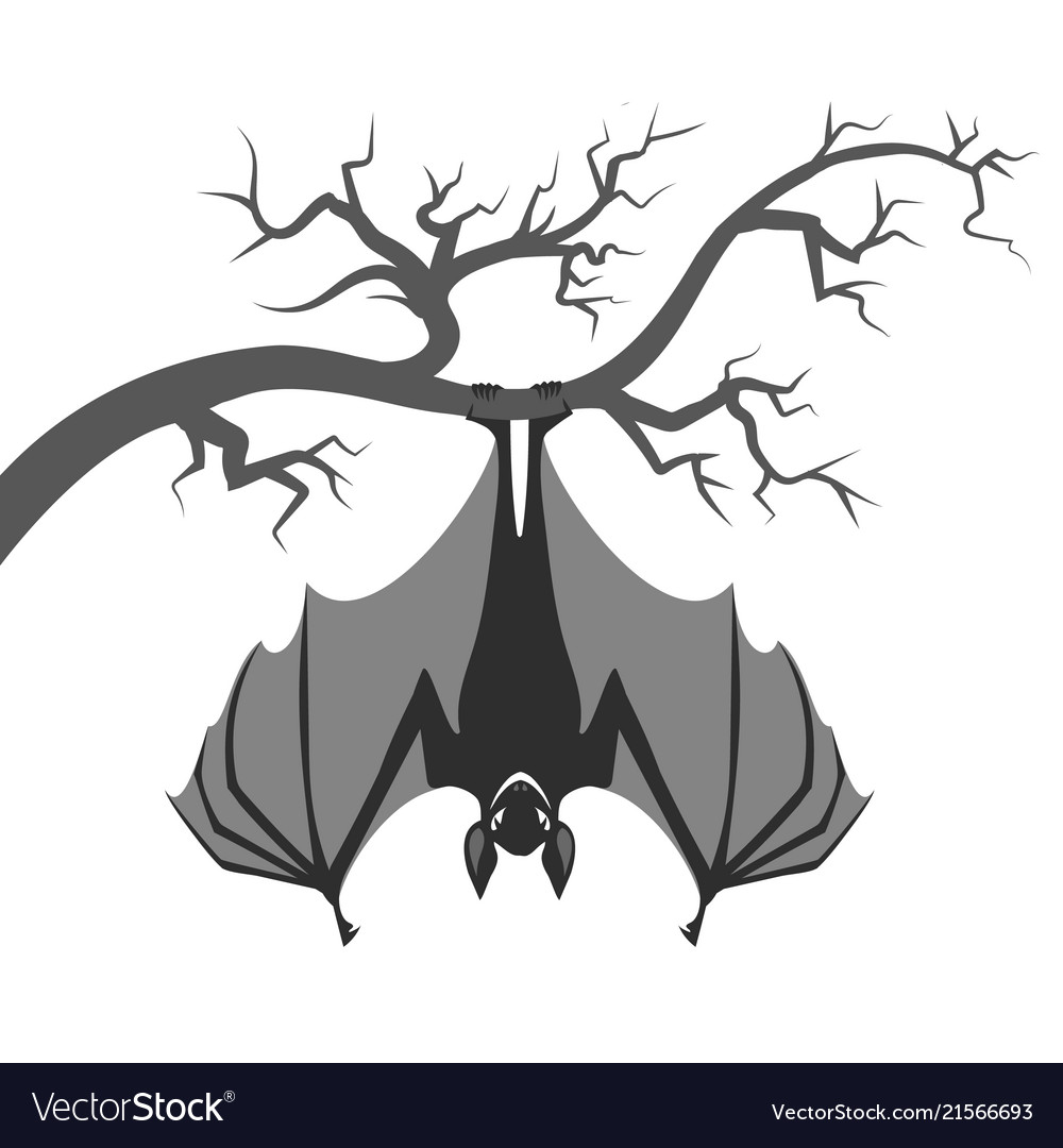 Bat on branch
