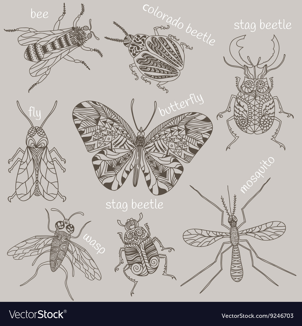 Insects Bee Beetles Mosquito vector image