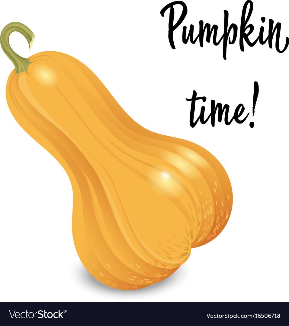 Oblong orange pumpkin isolated on white vector image