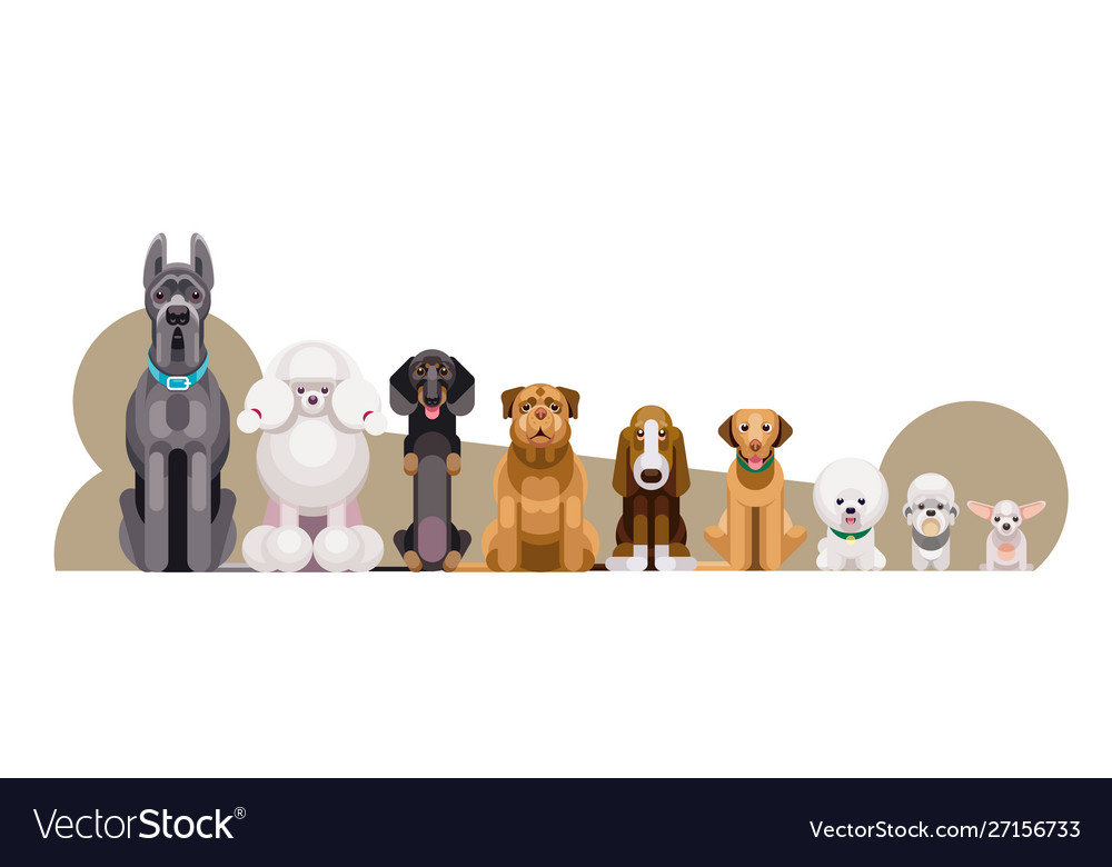 Dogs different breeds height
