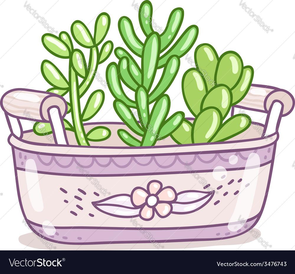 Succulents in a pot vector image