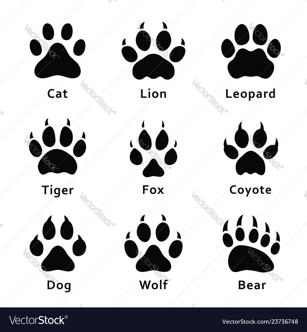 Animals footprints paw prints set different