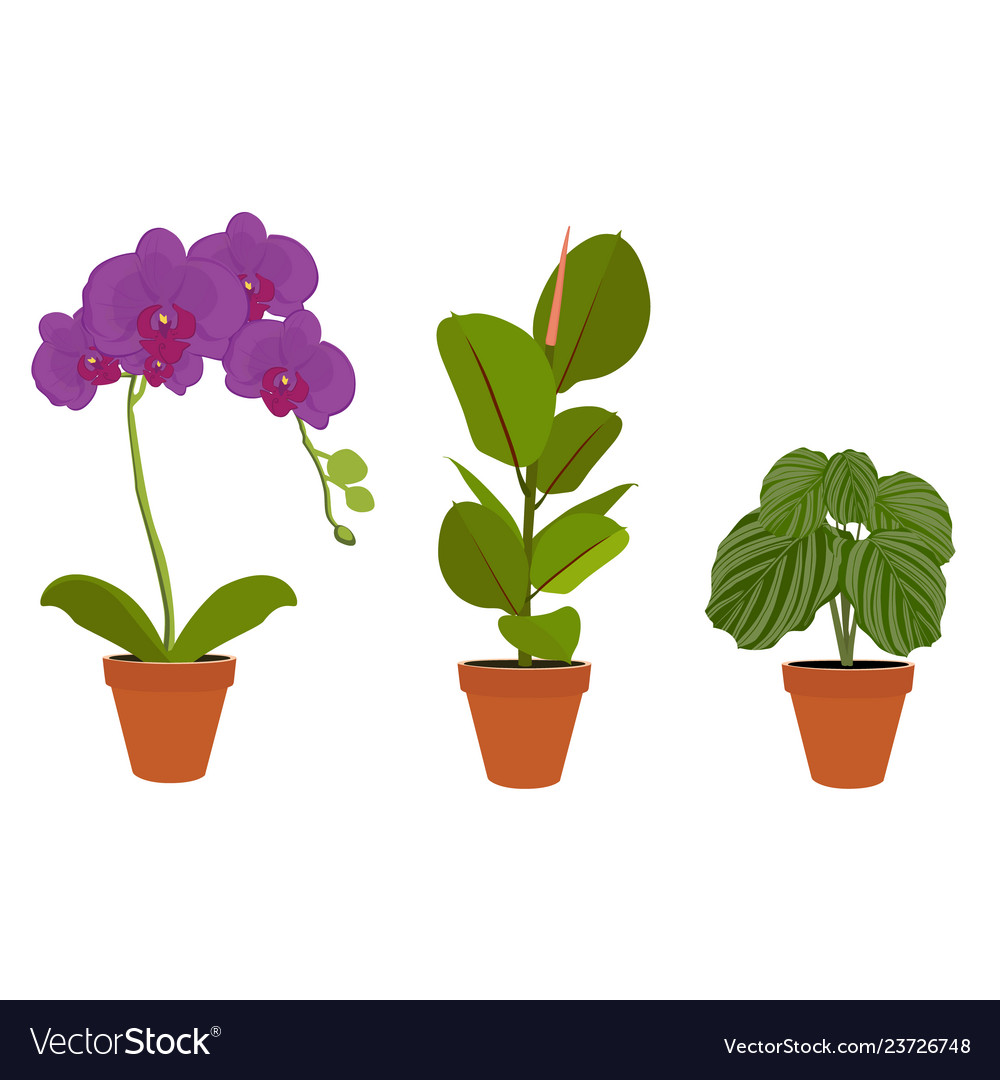 Various potted houseplants garden potted plants