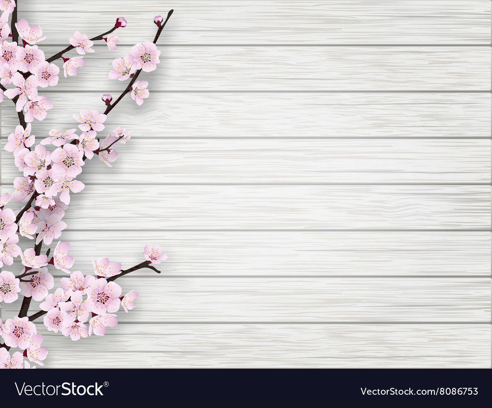 Spring cherry pink flower on white old wood