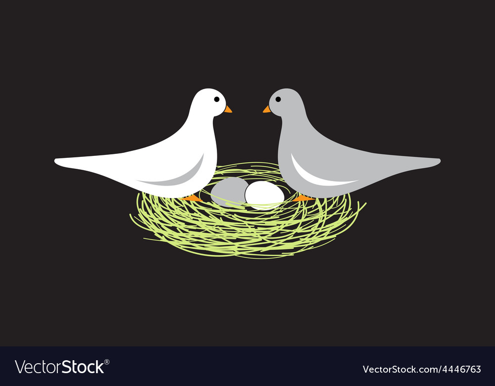 Birds in nest with eggs