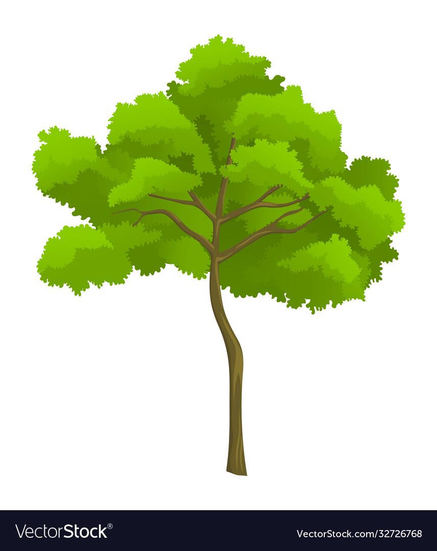 Cartoon green tree isolated at