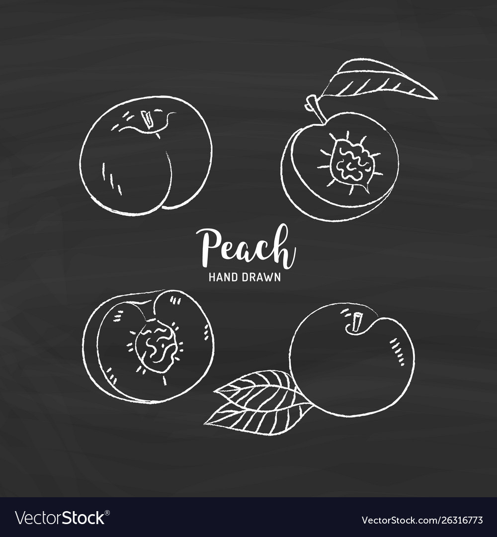 Peach fruit drawing peach fruit cut in half with