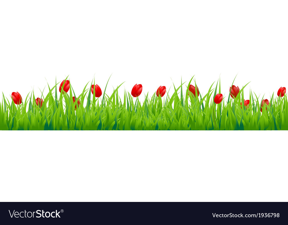 Red Tulip Border Royalty Free Vector Image - VectorStock