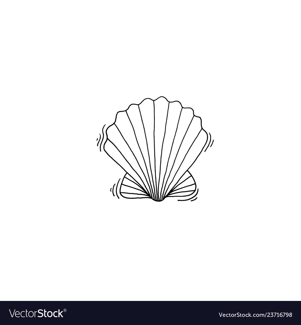 Shell sketch drawing icon summer themed