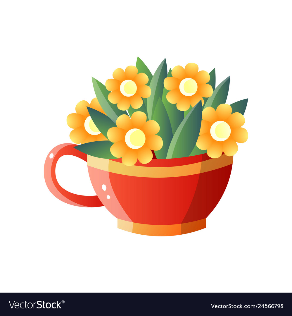 Yellow flowers in red jug isolated on white