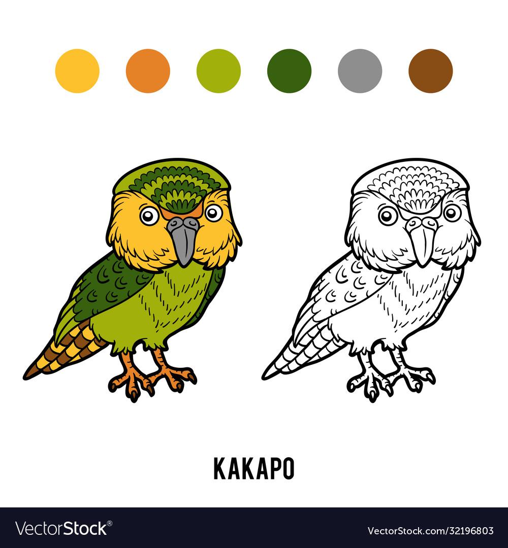Coloring book kakapo parrot
