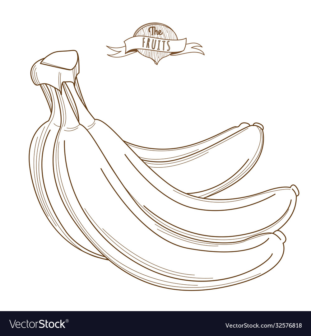 Outline hand drawn bunch bananas flat style