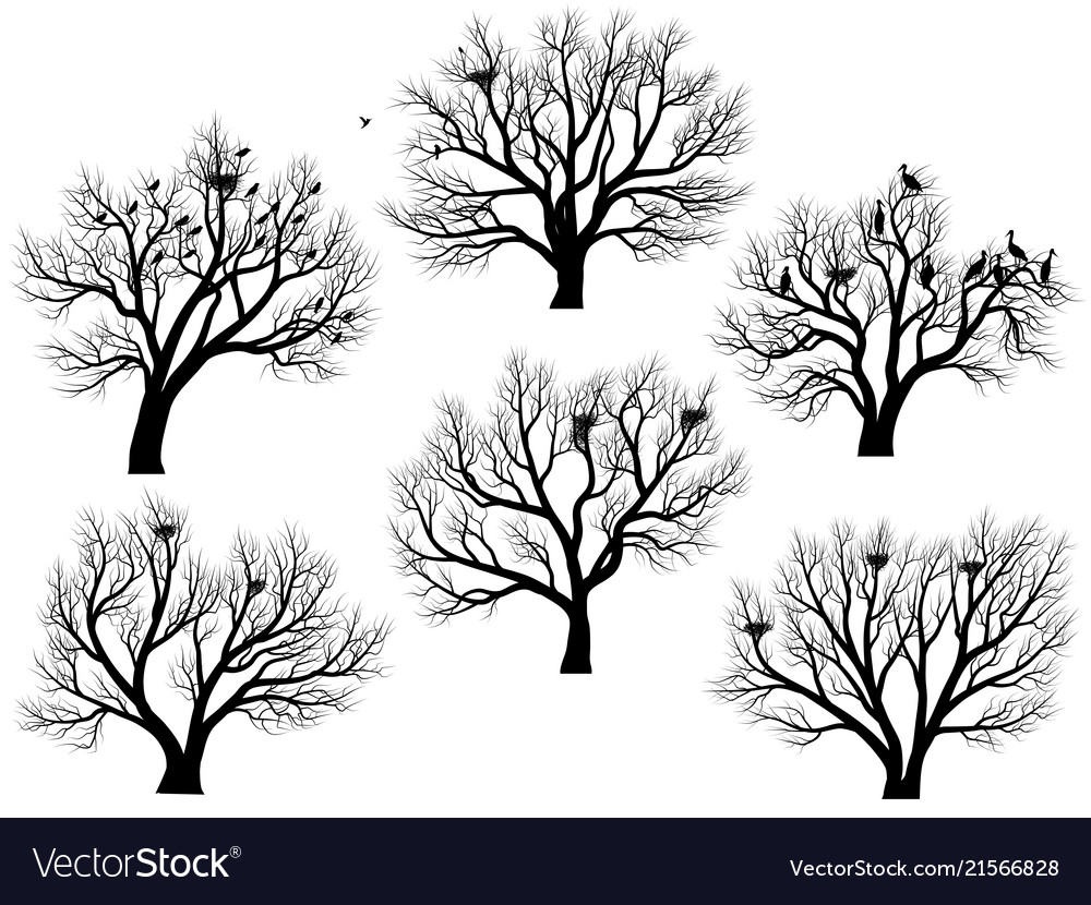 Silhouettes of birds nest in trees without leaves