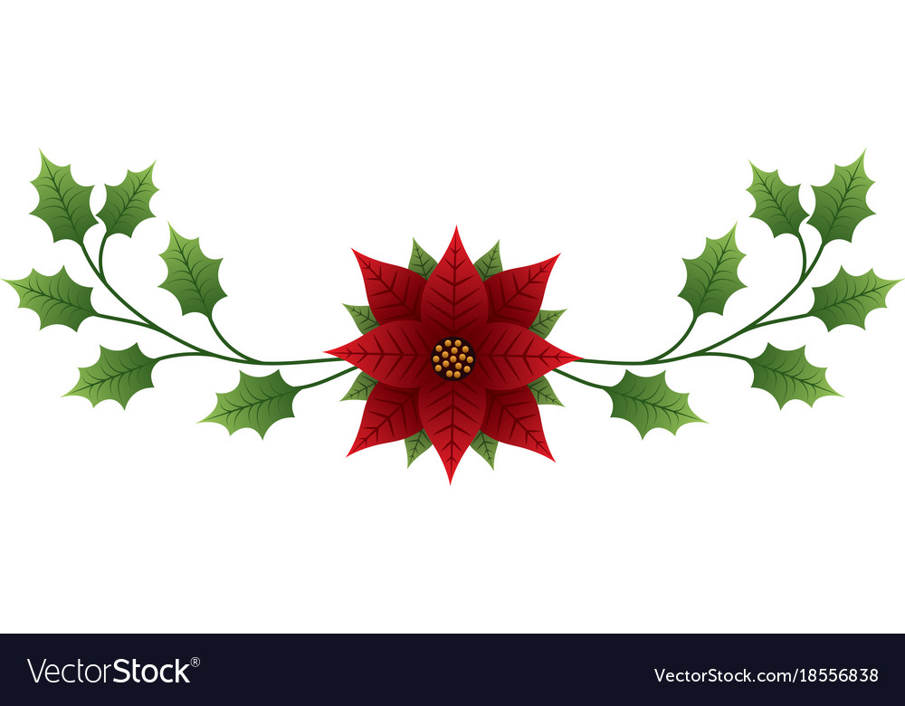 Christmas flower poinsettia evergreen foliage