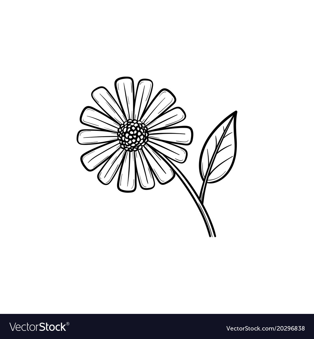 Daisy Flower Sketch Drawing Flowers Healthy