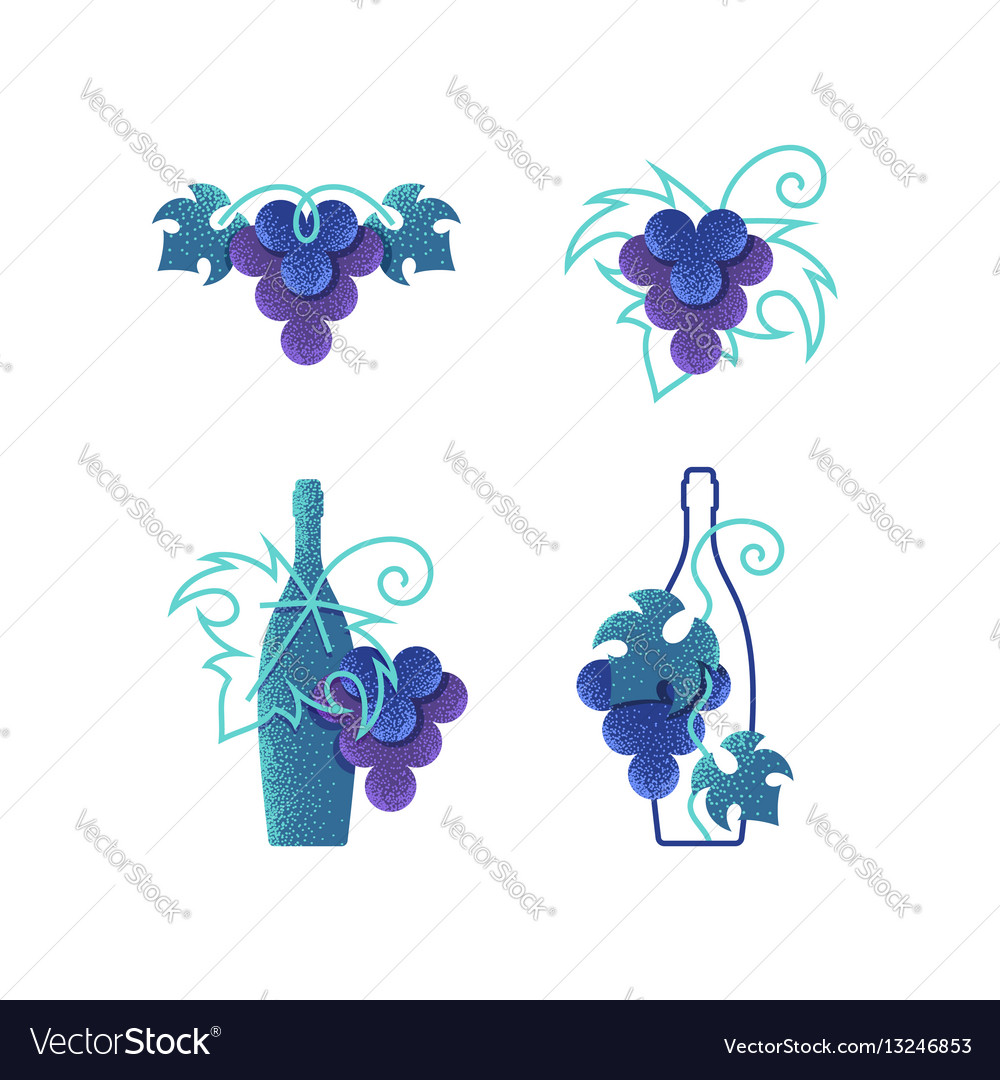 Wine grapes and bottles vector image