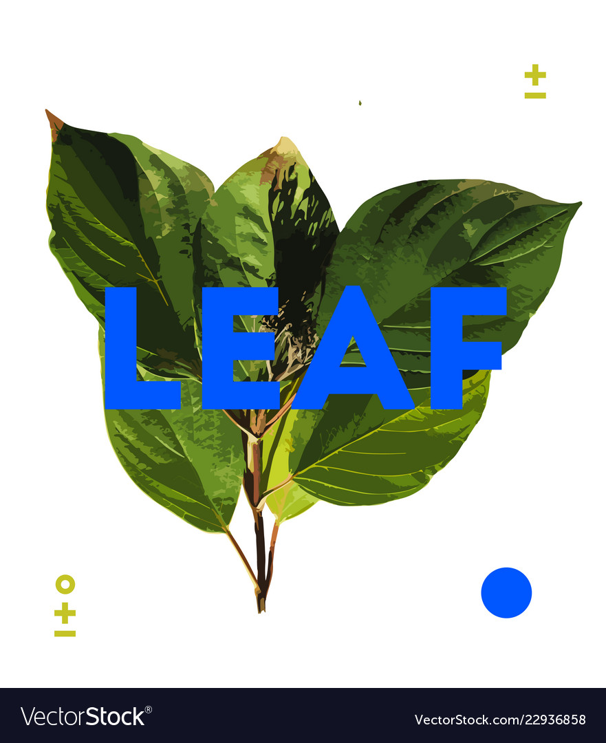Designer element of natural leave herb