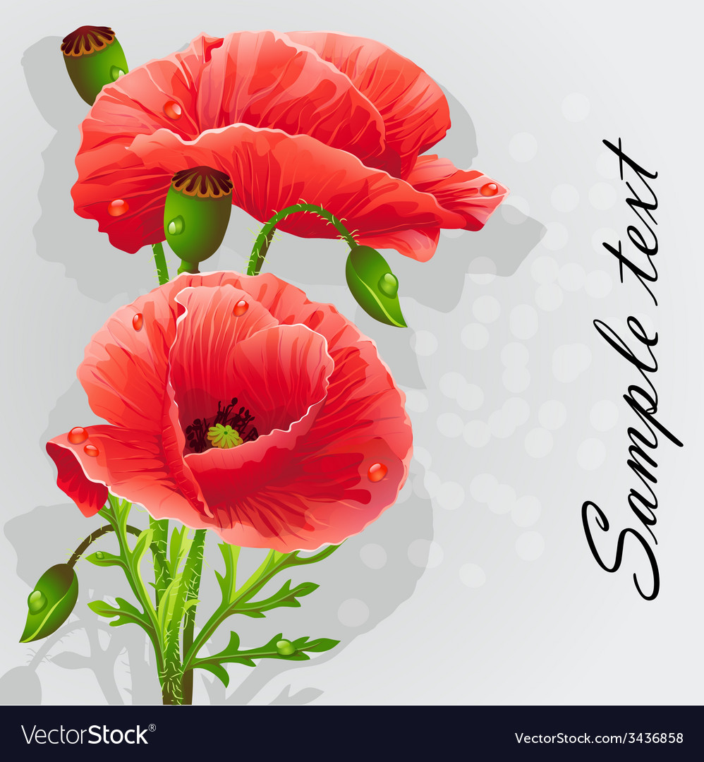 Romantic background with poppies