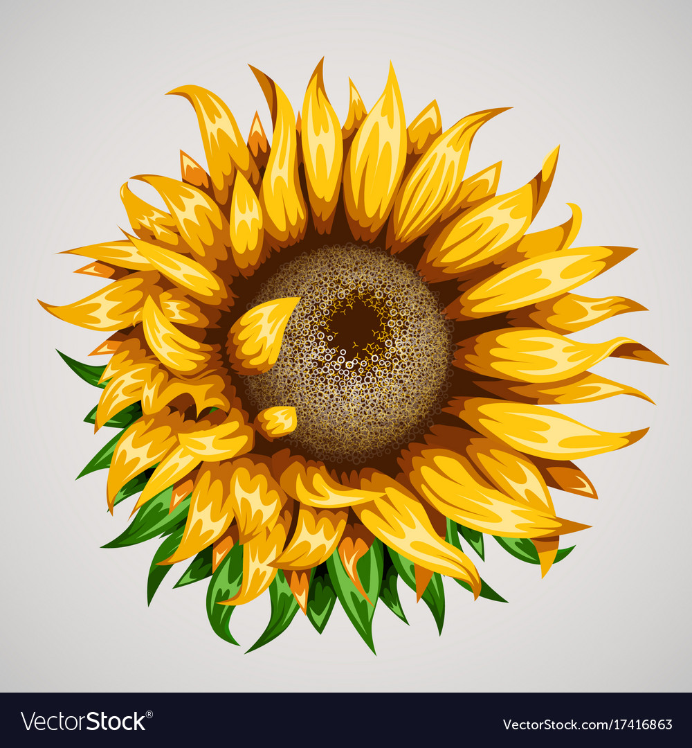 Realistic beautiful sunflower yellow flower vector image izmirmasajfo