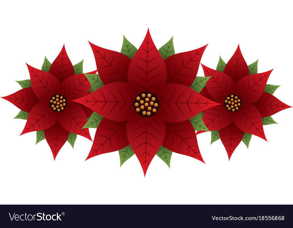 christmas poinsettia flower and leaves decoration vector image - Poinsettia Christmas Decorations