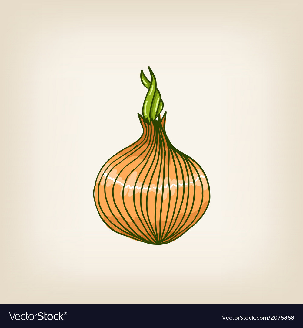 Shiny hand drawn onion