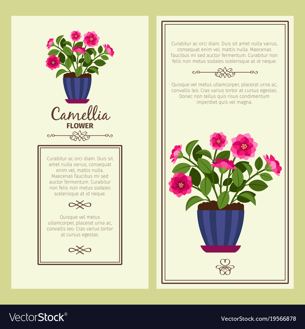 Camellia flower in pot banners vector image