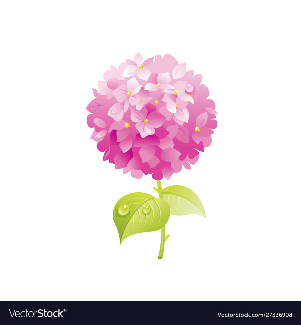 Hydrangea Flower Floral Icon Realistic Cartoon Vector Image