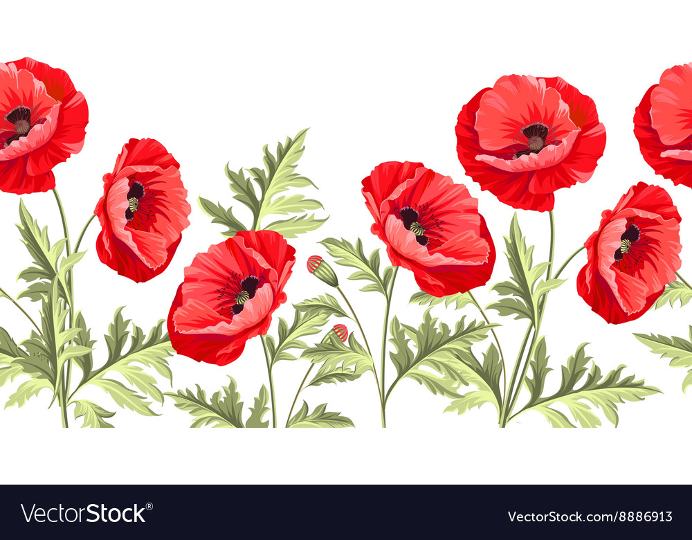 Bunch Poppy Flowers On A White Background Vector Image On Vectorstock