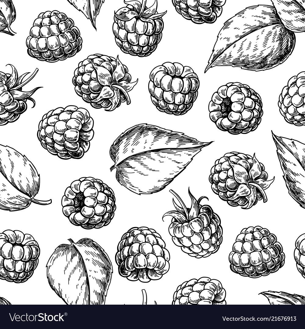 Raspberry seamless pattern drawing