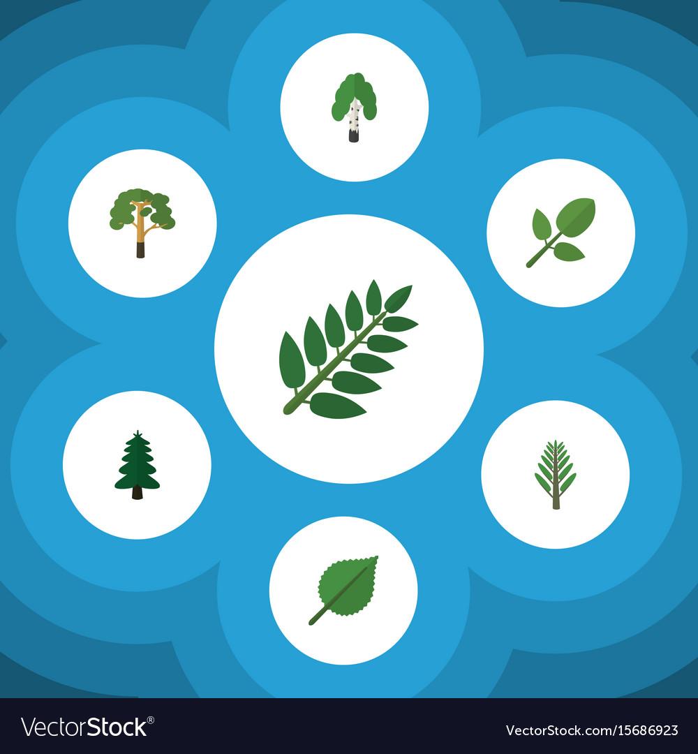 Flat icon natural set of acacia leaf linden