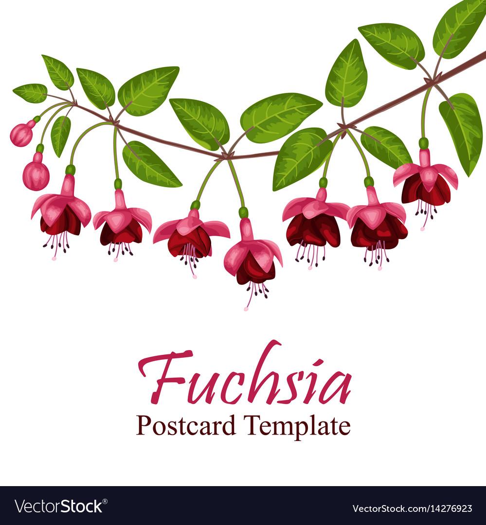 Fuchsia postcard template