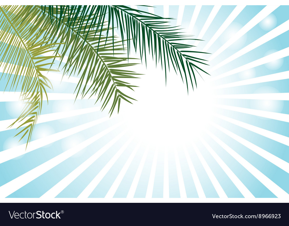 Palm Leaf or Coconut leaf Background
