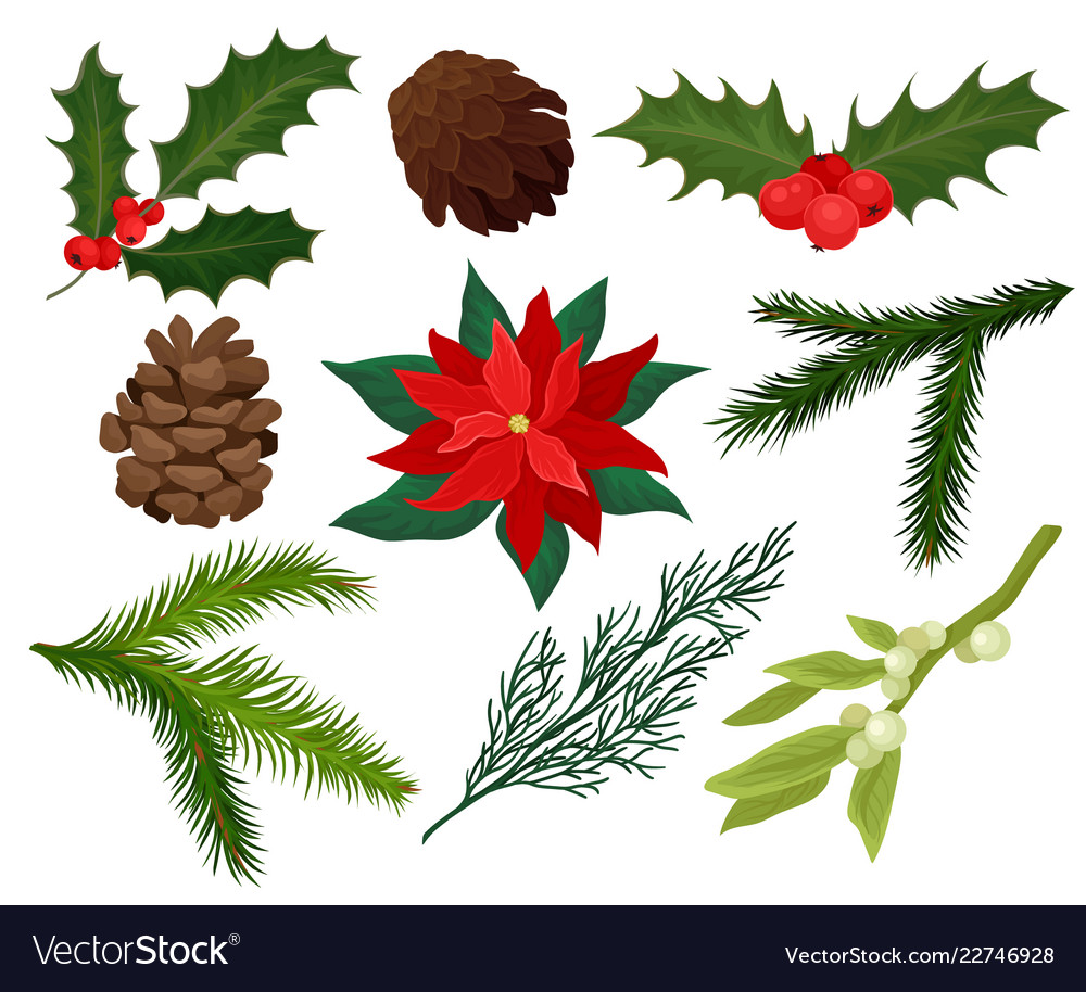 Flat Set Of Christmas Plants Holly With Royalty Free Vector