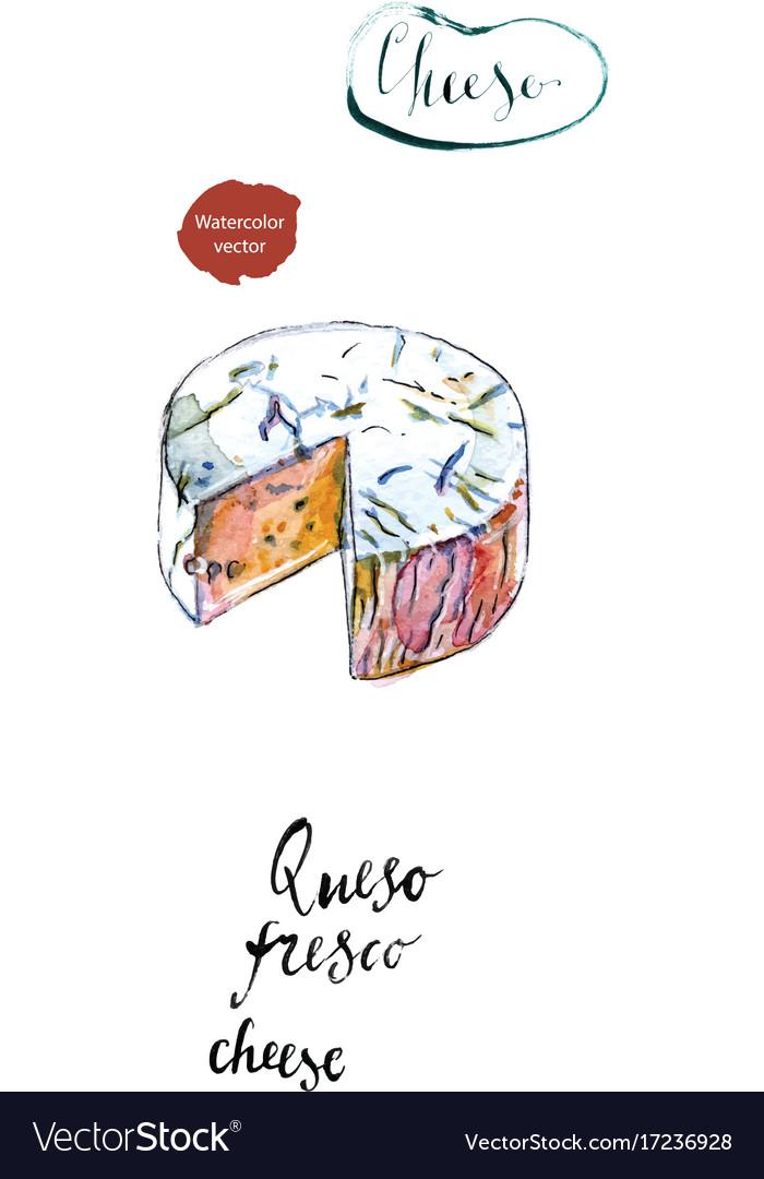 Piece of latin american cheese queso fresco vector image