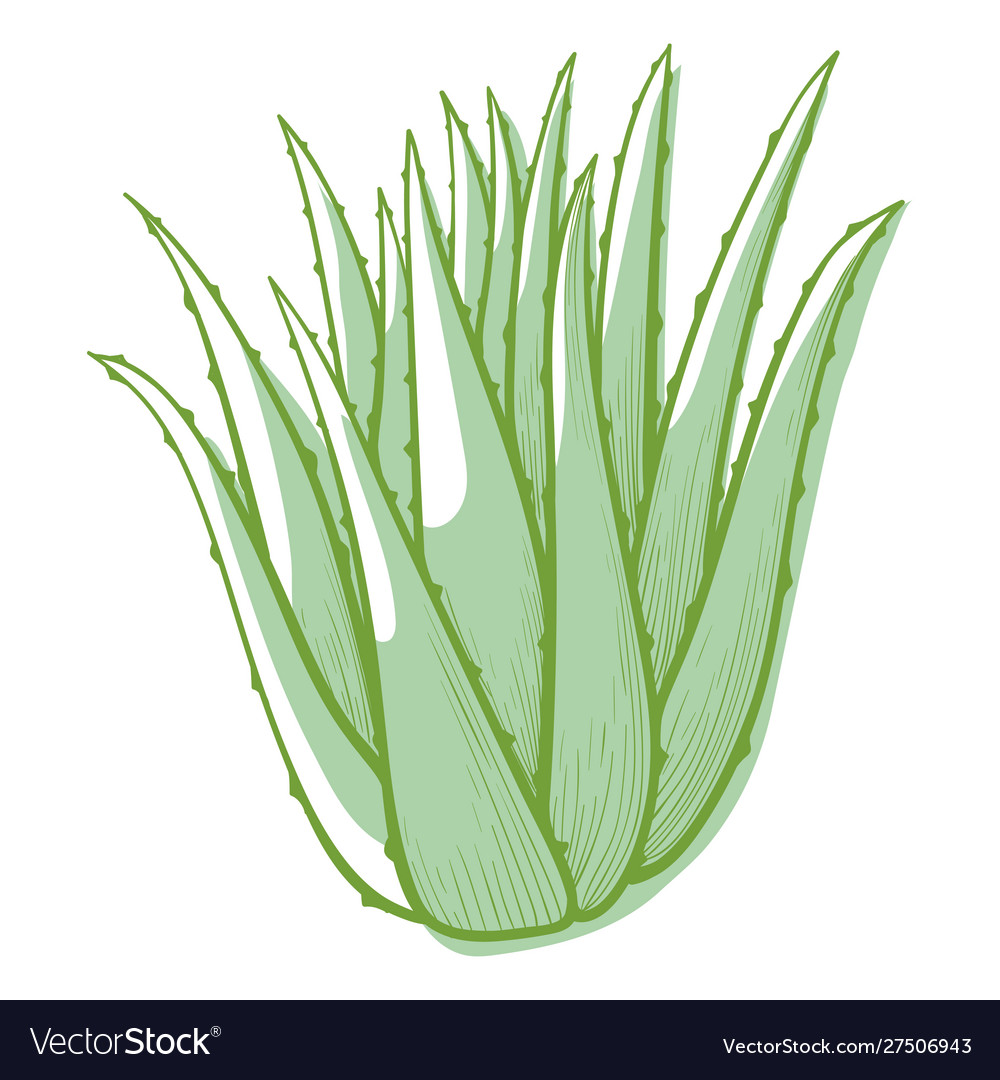 Aloe flower icon cactus for botanical decoration